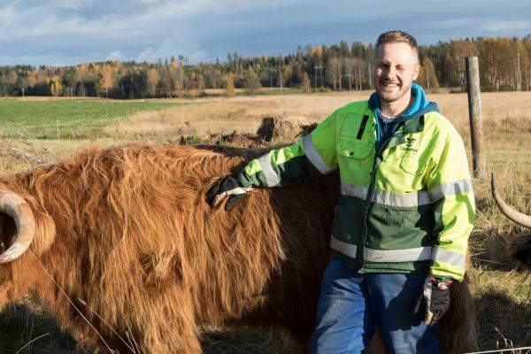 Honkaniemen tilan isäntä Marko Honkaniemi laitumella ylämaankarjasonnin kanssa.